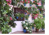 Garden maintenance, landscape gardening Costa Blanca